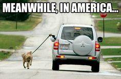 lazy american3