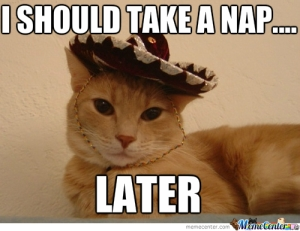 lazy-mexican-cat_o_1887889